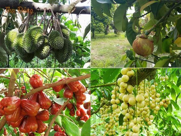 Vườn trái cây ở khu du lịch Lung Cột Cầu