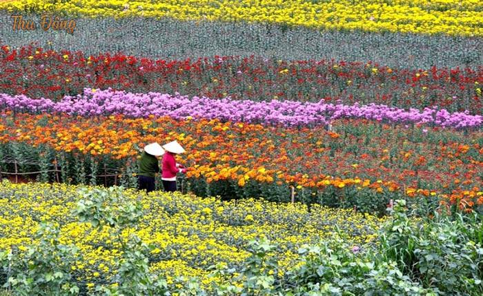 Làng hoa - địa chỉ để tạo nên bức ảnh lưu niệm ý nghĩa