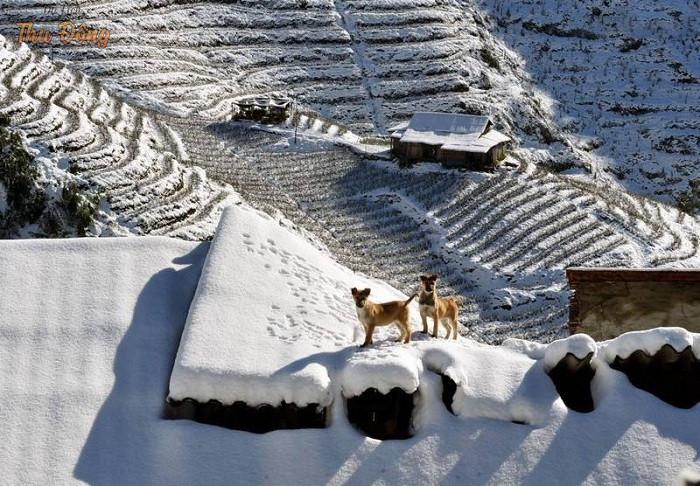 Tuyết phủ trắng xóa trên ruộng bậc thang vào mùa đông