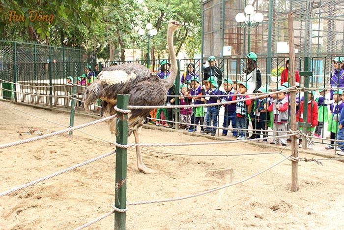 Bé quan sát các loại động vật tại Công viên
