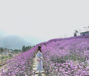 Mùa hoa tím sapa