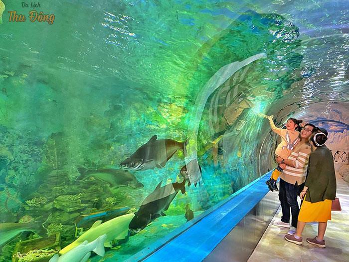 Các bé được tận mắt chiêm ngưỡng sinh vật dưới nước